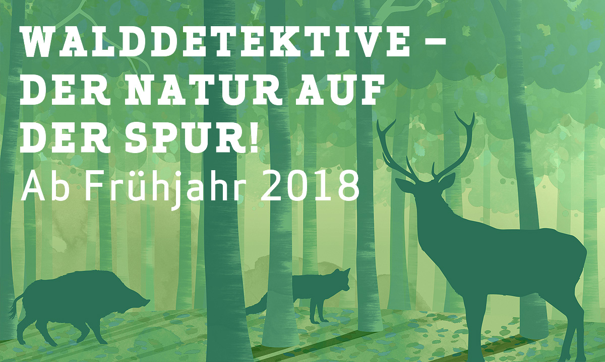 Teaser_Waldausstellung